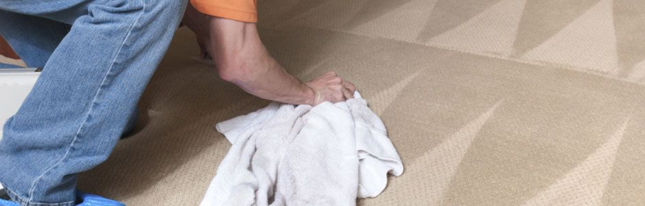 Scrubbing carpet